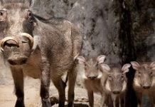 burgers-zoo-aanbiedingnl