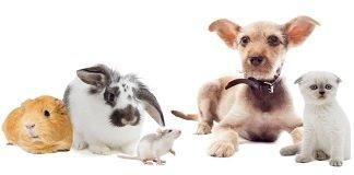 huisdier-aanbieding